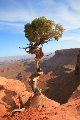 moab-tree