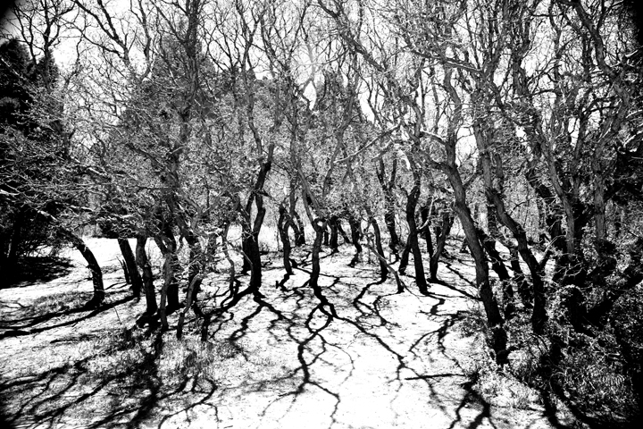 squiglytrees