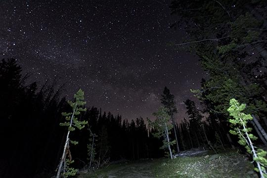 constellation_trees