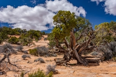 Canyonlands 2019 13